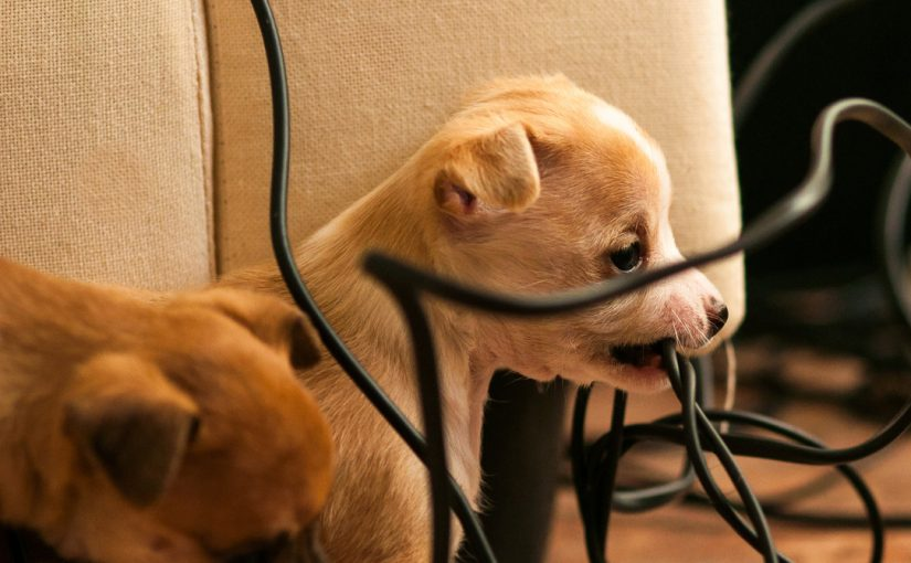 Keeping Your Pets Safe from Electrical Harm