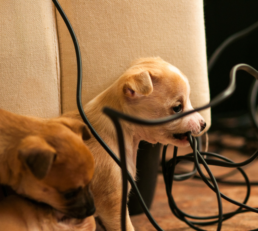 Keeping Your Pets Safe from Electrical Harm - TFC Electric Inc.